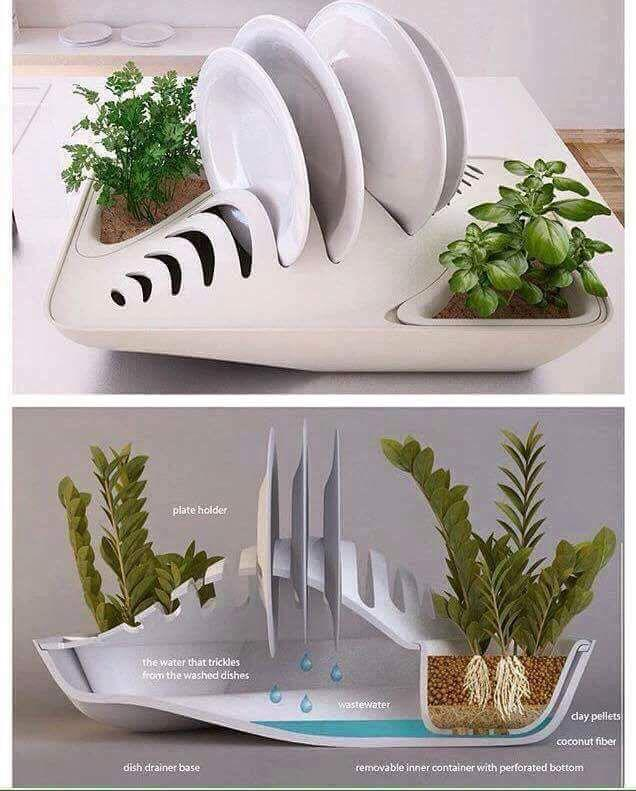 Dish Rack Water Plant